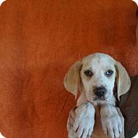 Adopt A Pet :: Dino - Oviedo, FL