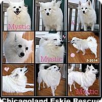 Adopt A Pet :: Mystic - Elmhurst, IL