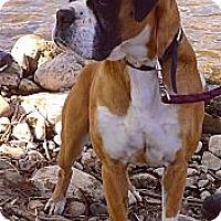 Adopt A Pet :: Delilah loves to cuddle - Sacramento, CA