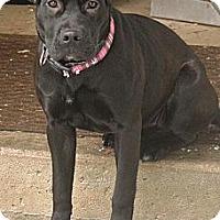 Adopt A Pet :: Maddie - Hop Bottom, PA