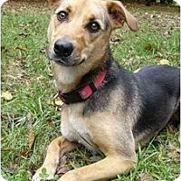 Adopt A Pet :: Cassy - Mocksville, NC