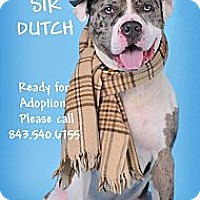 Adopt A Pet :: DUTCH AKA PUDDING - Okatie, SC