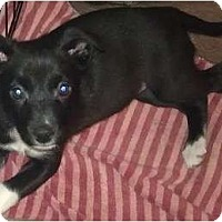 Adopt A Pet :: Betsy - Phoenix, AZ