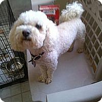 Adopt A Pet :: Bennett - Santa Monica, CA