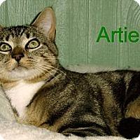 Adopt A Pet :: Artie - Medway, MA