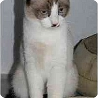 Adopt A Pet :: Bosley - Marietta, GA