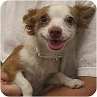 Adopt A Pet :: Liza - Phoenix, AZ