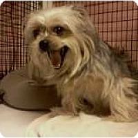 Adopt A Pet :: Roxy - Niceville, FL