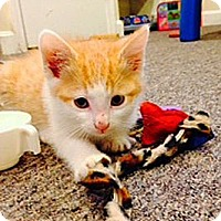 Adopt A Pet :: Mercury - N. Billerica, MA