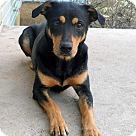 Adopt A Pet :: VENUS
