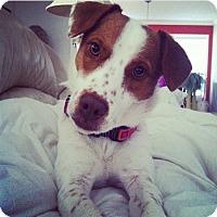 Adopt A Pet :: Little - Windham, NH