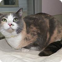 Adopt A Pet :: Sofie - Dover, OH