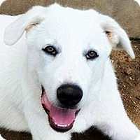 Adopt A Pet :: Andre - Kyle, TX