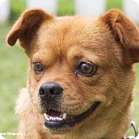 Adopt A Pet :: Louisa - Knoxville, TN