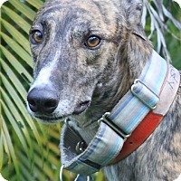 Adopt A Pet :: Justy - West Palm Beach, FL
