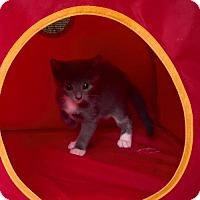 Adopt A Pet :: Zigzag - Miami, FL