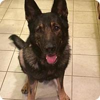 Adopt A Pet :: Gnar - Morrisville, NC