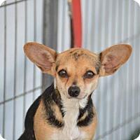 Adopt A Pet :: Chloe - Vacaville, CA