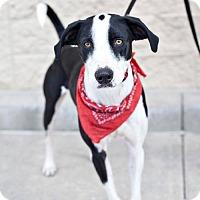Adopt A Pet :: Tater - Salt Lake City, UT