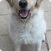 Adopt A Pet :: Duke - Spartanburg, SC