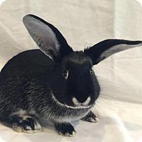 Adopt A Pet :: Buckeye - Columbus, OH