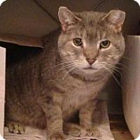 Adopt A Pet :: Gary Cooper - Toronto, ON