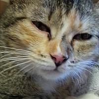 Adopt A Pet :: Trixie - Waxhaw, NC