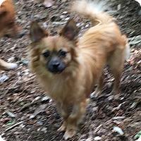 Adopt A Pet :: Skippy - Atlanta, GA