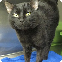 Adopt A Pet :: Sawyer - Elkins, WV