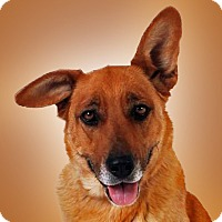 Adopt A Pet :: Kaluah - Prescott, AZ