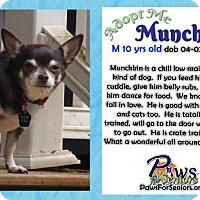 Adopt A Pet :: Munchkin - Bealeton, VA