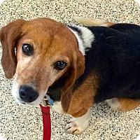 Adopt A Pet :: Lucy - Leonardtown, MD