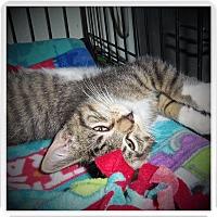 Adopt A Pet :: MONTY - Medford, WI