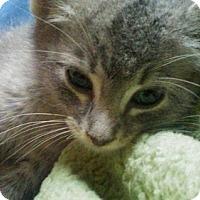 Adopt A Pet :: Felix - Hudson, NY
