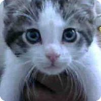 Adopt A Pet :: Mac - Eureka, CA
