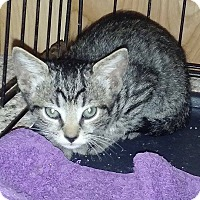 Adopt A Pet :: Dinky - New Smyrna Beach, FL