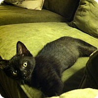 Adopt A Pet :: Jack - Brightwaters,, NY
