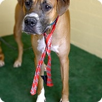 Adopt A Pet :: Chaboi - Casa Grande, AZ