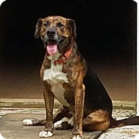 Adopt A Pet :: Buckshot(40 lb) Fun, GREAT Dog - SUSSEX, NJ