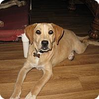 Adopt A Pet :: Maddie-ADOPTED - Somerset, KY