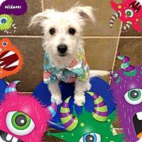 Adopt A Pet :: Monte - Palmdale, CA