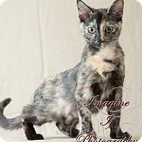 Adopt A Pet :: Dee - Oklahoma City, OK