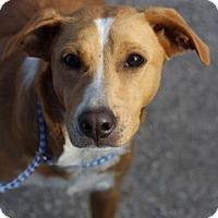 Hound (Unknown Type) Mix Dog for adoption in Von Ormy, Texas - Whisper