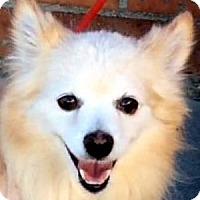 Adopt A Pet :: IZZY (video) - Los Angeles, CA