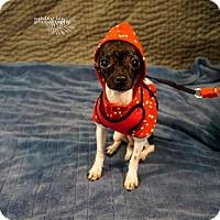 Adopt A Pet :: Tiny - Princeton, MN