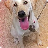 Adopt A Pet :: Maggie - Sheboygan, WI