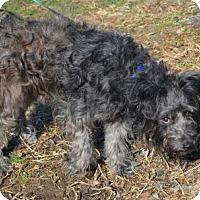 Adopt A Pet :: Mushu - Akron, OH