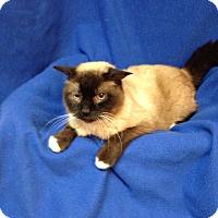 Adopt A Pet :: Mason - Newport, KY