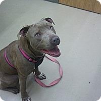 Adopt A Pet :: Kanga - nashville, TN