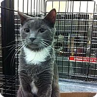 Adopt A Pet :: Cisco - Pittstown, NJ